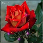 Анимационная роза