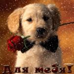 Блестящая открытка для тебя с щенком