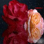 Картинка с живыми цветами