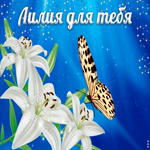 Белая лилия для тебя