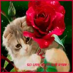 Без слов но от души тебе роза
