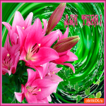 Букет красивых лилий для тебя