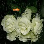 Букет роз под дождём