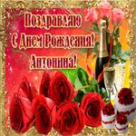 Букет роз в твой день рождения, Антонина