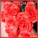 Букет шикарных красных роз