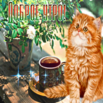 Чудесная открытка доброе утро с котиком