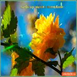 Цветок для милой и обаятельной