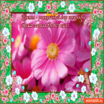 Цветы - Роскошный дар природы