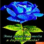 Дарю розу любя