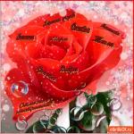 Дарю тебе розу пожеланий