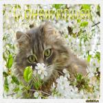 День кошек стих