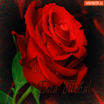 Для тебя эта роза