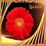 Для тебя необычный цветок