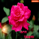 Для тебя прекрасный цветок