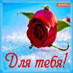 Для тебя роза красивая