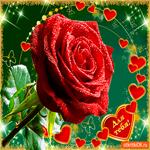 Для тебя роза красная