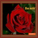 Для тебя роза необычная