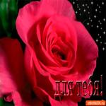 Для тебя роза прекрасная