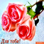 Для тебя розовые розы