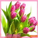 Для тебя тюльпаны эти