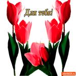 Для тебя тюльпаны