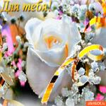Для тебя цветочек от меня