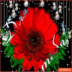 Для тебя цветок шикарный