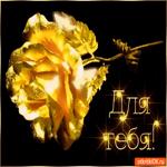 Для тебя золотая роза