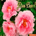 Для вас цветы