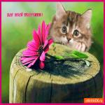 Для моей подружки нежный цветок