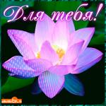 Для тебя цветок