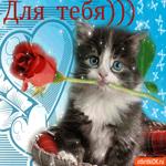 Для тебя котик с розой