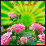 Для тебя нежные розы