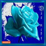 Для тебя синяя роза