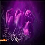 Картинка подруге с тюльпанами