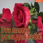 Эта милая роза для тебя