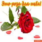 Эта роза для тебя
