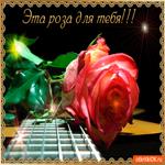 Эта роза для тебя моя дорогая