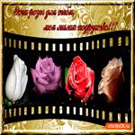 Эти розы для тебя, моя милая подружка
