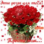 Эти розы для тебя, Просто так от меня