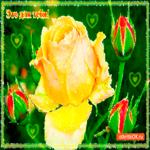 Этот маленький цветочек для тебя