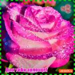 Этот цветок тебе золотце