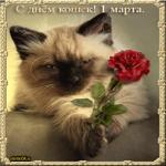 Фото ко дню всемирного дня кошек