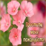 Фото открытка прости