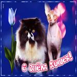 Гиф открытка с Всемирным днем кошек