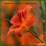 Хорошего тебе настроения в любую погоду