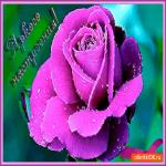 Яркого как роза настроения