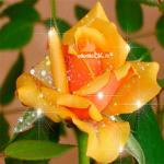 Желтая розочка для тебя