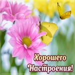 Картинка для хорошего настроения с цветами