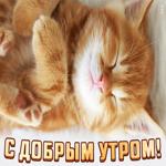 Картинка доброе утро с маленьким котенком